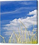 Tall Grass On Sand Dunes Canvas Print