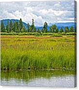Tall Grasses In Swan Lake In Grand Teton National Park-wyoming Canvas Print