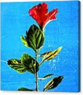 Tall Hibiscus - Flower Art By Sharon Cummings Canvas Print