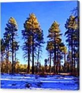 Tall Ponderosa Pine Canvas Print