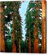 Tall Trees In Yosemite National Park Canvas Print