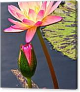 Tall Waterlily Beauty Canvas Print