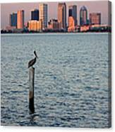 Tampa Skyline And Pelican Canvas Print