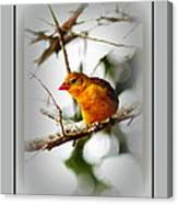 Tanager 4296 Canvas Print
