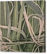 Tangled Arrangement Canvas Print