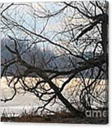 Tangled Branches Canvas Print