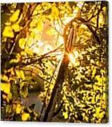 Tangled Flare Canvas Print