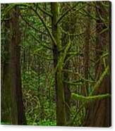 Tangled Forest Canvas Print