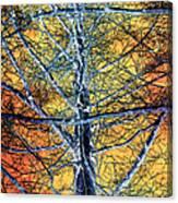 Tangled Web 2 Canvas Print