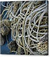 Tangles Of Seaweed 2 Canvas Print