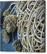 Tangles Of Seaweed Canvas Print