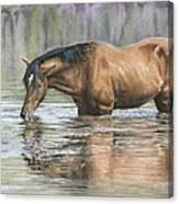 Tango On The Salt River Canvas Print