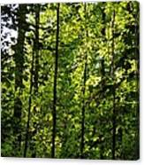 Tannehill Forest Canvas Print