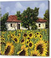 Tanti Girasoli Davanti Canvas Print