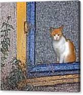 Taos Cat Canvas Print