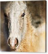 Taos Pony X Canvas Print