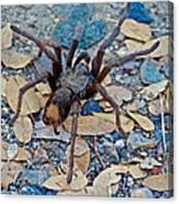 Tarantula Spider In Park Sierra Near Coarsegold-california Canvas Print