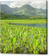 Taro Fields In Hanalei National Canvas Print