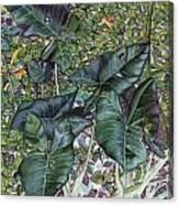 Taro Garden Canvas Print