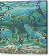 Tarpon Rolling In0025 Canvas Print
