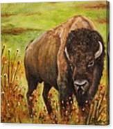 Tatanka, Buffalo  Canvas Print