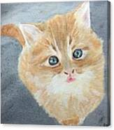 Tater Bud Kitty Canvas Print
