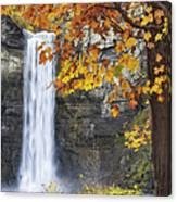 Taughannock Falls And Maple Canvas Print