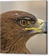 Tawny Eagle 3 Canvas Print