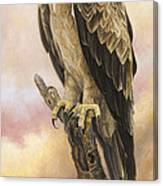 Tawny Eagle Canvas Print