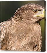 Tawny Eagle Portrait Canvas Print