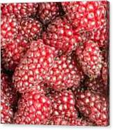 Tayberries  Canvas Print