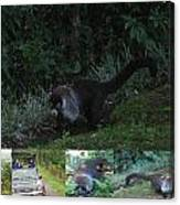 Tayra Costa Rica Animals Zoo Habitat Indigenous Population Mixing With Travellers Enjoying And Being Canvas Print