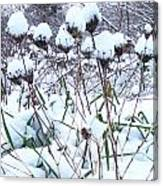 Tea Cups Of Snow Canvas Print