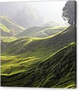 Tea Estate Canvas Print
