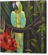Teal Chartreuse Parrot Canvas Print