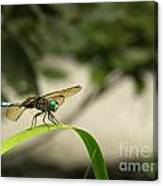 Teal Dragonfly Canvas Print