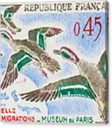 Teal Study Of Migration-museum Of Paris Canvas Print