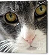 Tears Of A Cat Canvas Print
