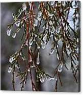 Tears Of Ice Canvas Print