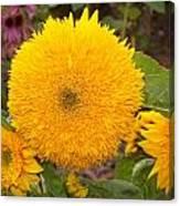 Teddy Bear Sunflower 2 Canvas Print