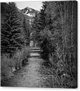 Telluride Stream Canvas Print