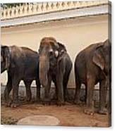 Temple Elephants Maharaja's Palace India Mysore Canvas Print
