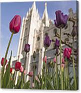 Temple Tulips Canvas Print