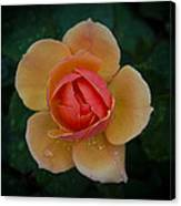 Tender Rose Canvas Print