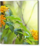 Tenderness Of Morning Canvas Print