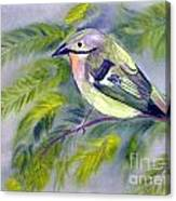 Tenerife Goldcrest Canvas Print