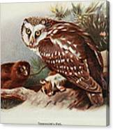 Tengmalms Owl Canvas Print