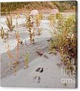 Tents At Yukon River In Remote Taiga Wilderness Canvas Print