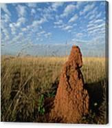 Termite Mound In Cerrado Grassland Emas Canvas Print