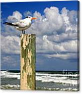 Tern On A Piling Canvas Print